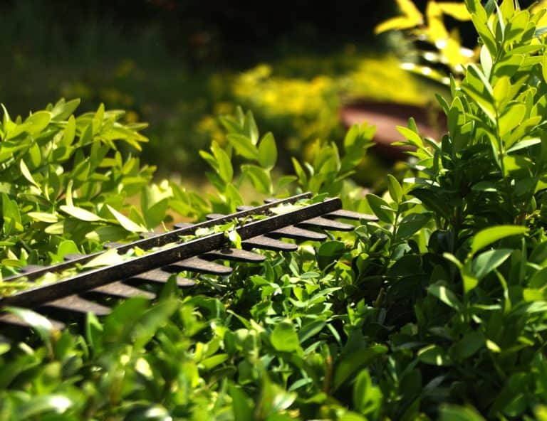 Which Is the Best Hedge Trimmer to Buy?