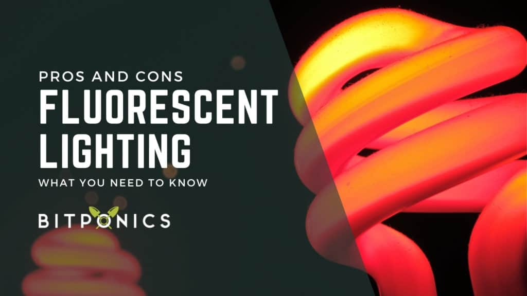 Fluorescent Grow Lights: Pros and Cons