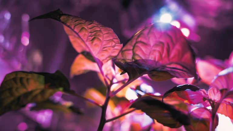 HID vs LED Grow Lights: Which Is Best? My Honest Opinion