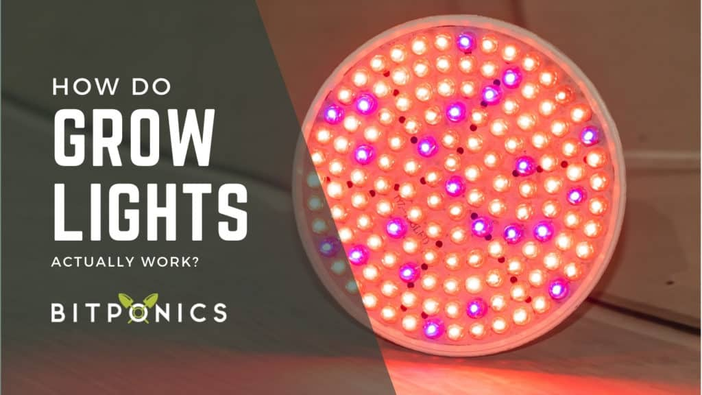 What are grow lights and how do they work?