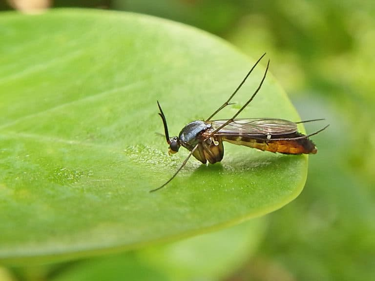 How to Get Rid of Fungus Gnats and Why You Absolutely Should