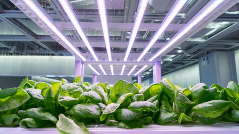 How to Use Grow Lights for Indoor Plants(4 Actionable Steps)