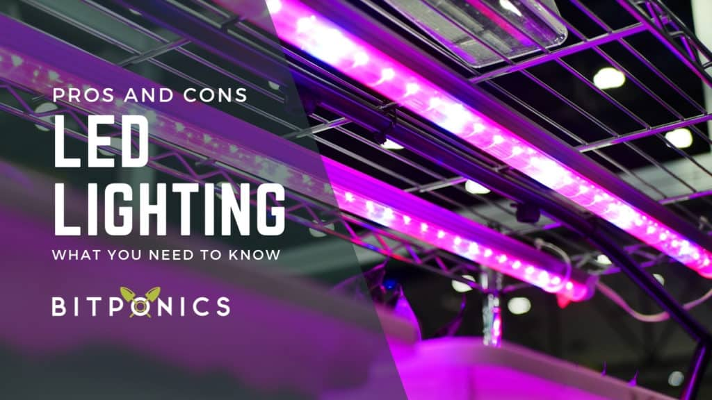 LED Grow Lights: Pros and Cons