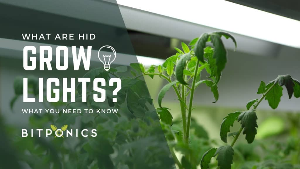 What are HID Grow Lights?