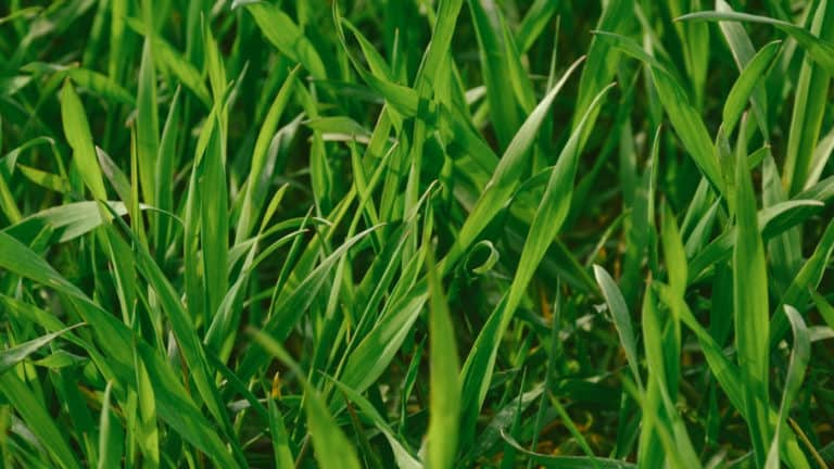 This Is The Best Time To Water Grass In Your Garden