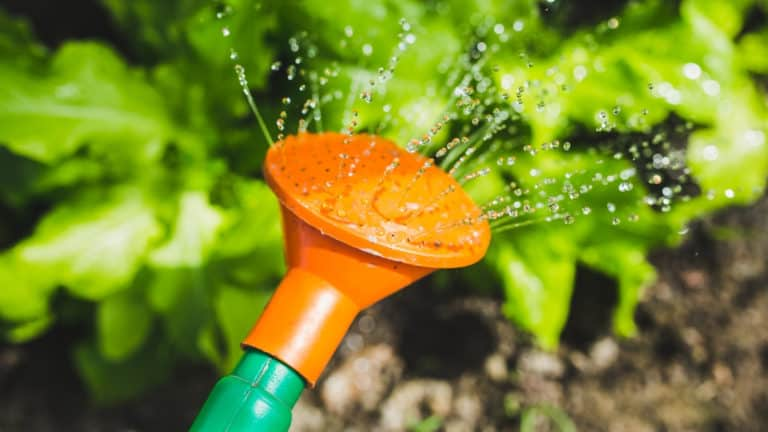 The Best Time to Water Plants All Year Round