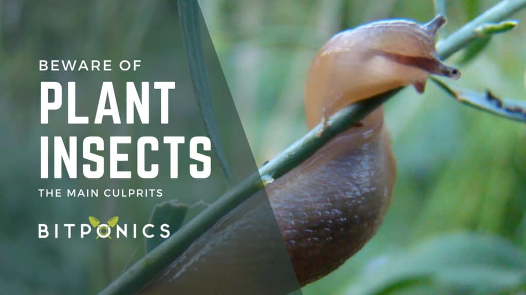 Beware Of Plant Insects Too.