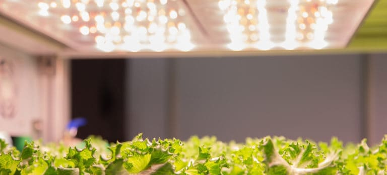 Can You Leave Grow Lights on 24 Hours a Day?