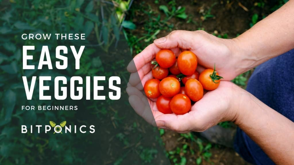 Easy Vegetables To Grow As A Beginner.