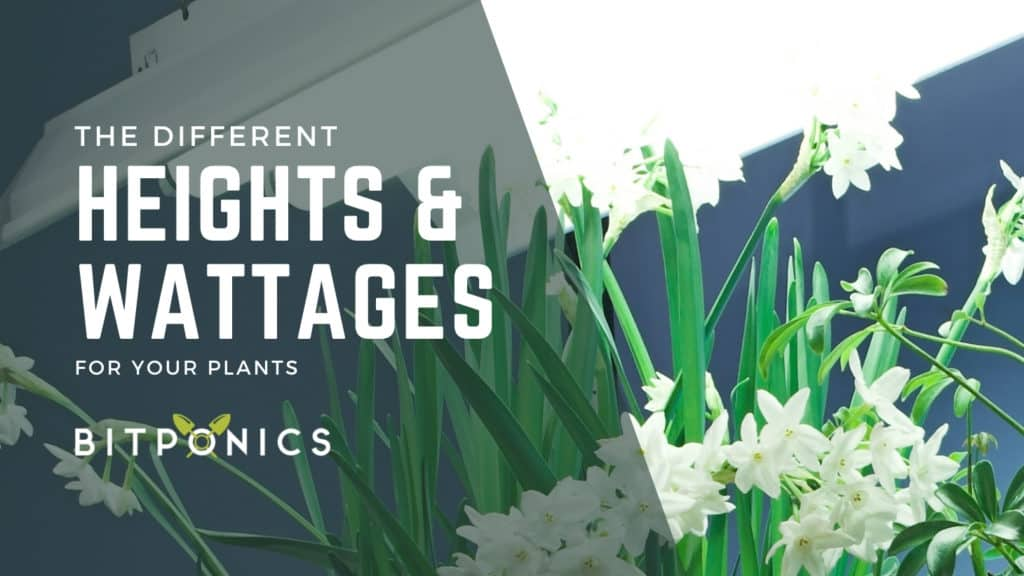 Different Heights for Different Grow Lights and Wattages