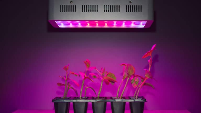 How Far Should Grow Lights Be From Plants?