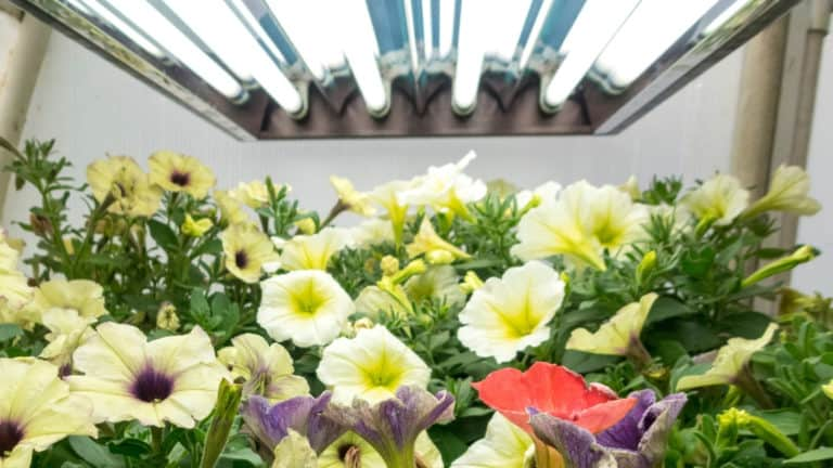How Much Do Grow Lights Cost to Run?