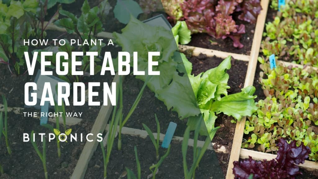 How To Plant A Vegetable Garden.