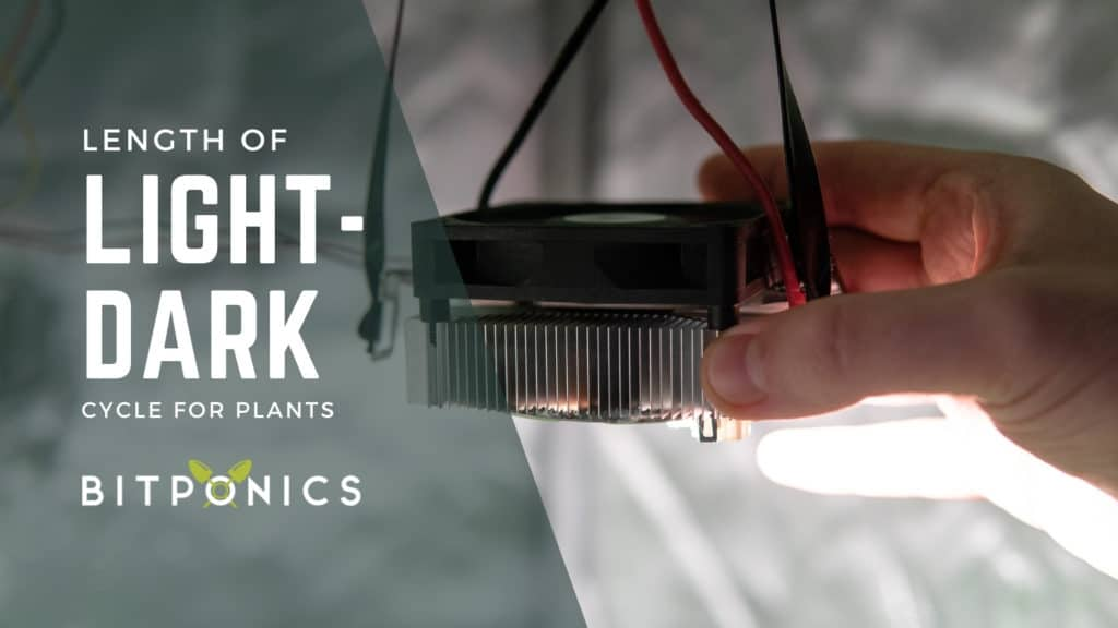 Length of Light-Dark Cycle in Plant Growth