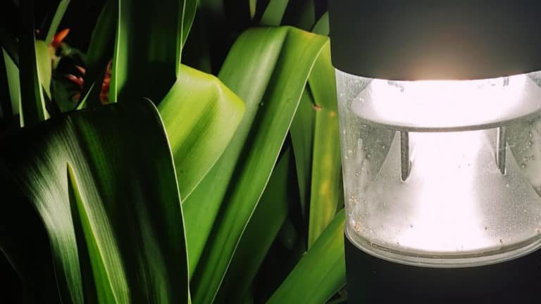 What Are the Brightest Outdoor Solar Lights?