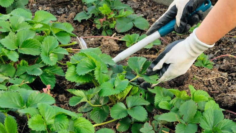What Are The Best Gardening Gloves?