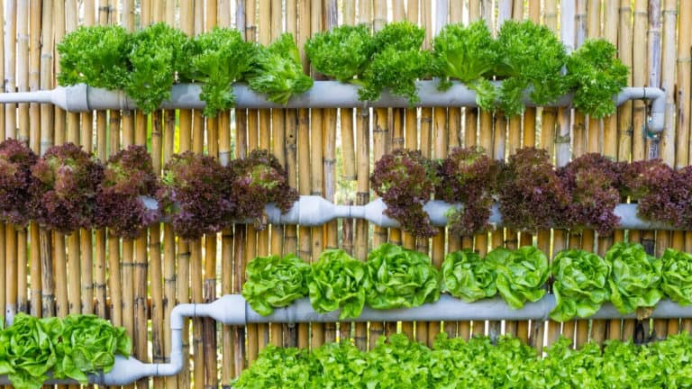 The Best Hydroponics System for Indoor Gardening