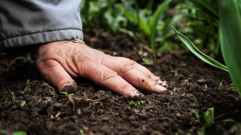 Best Organic Fertilizer For Your Plants, Fruits And Vegetables