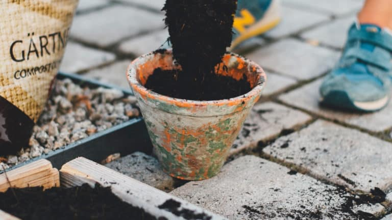 What Is The Best Potting Soil For Container Plants?