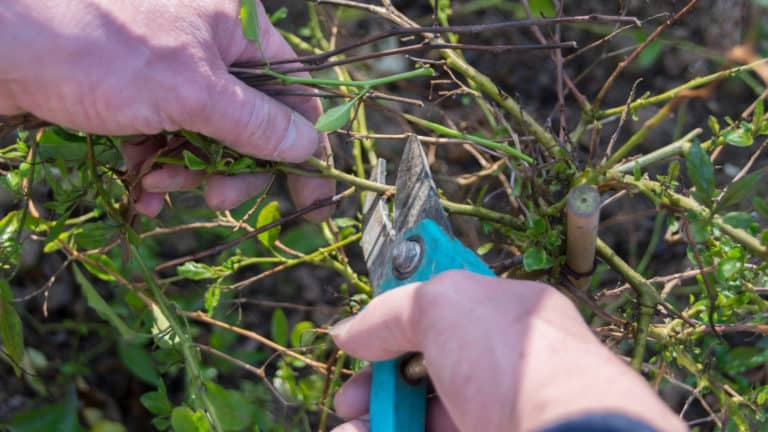 The 6 Best Pruning Shears for Your Garden