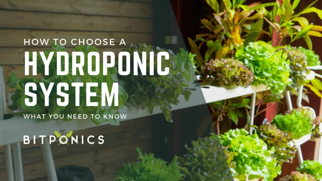 How to choose the best hydroponic system.
