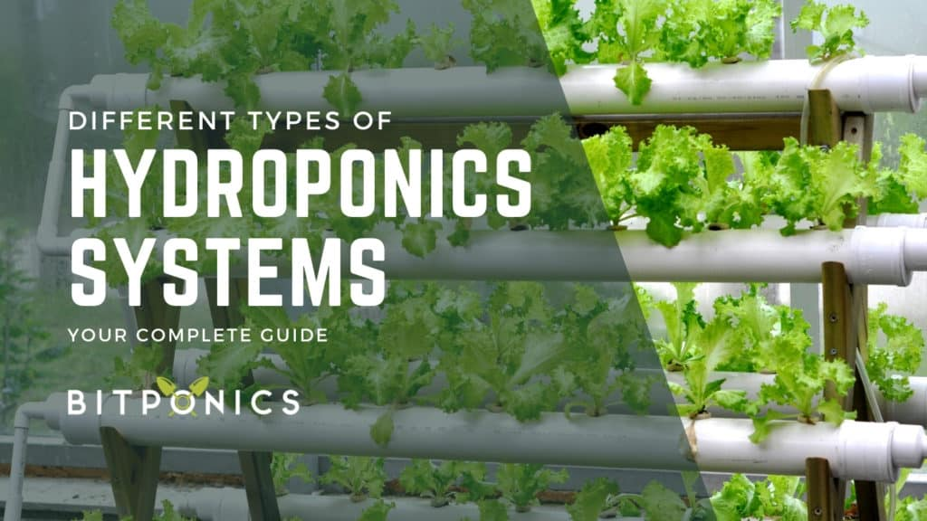 What Are the Different Types of Hydroponics Systems?
