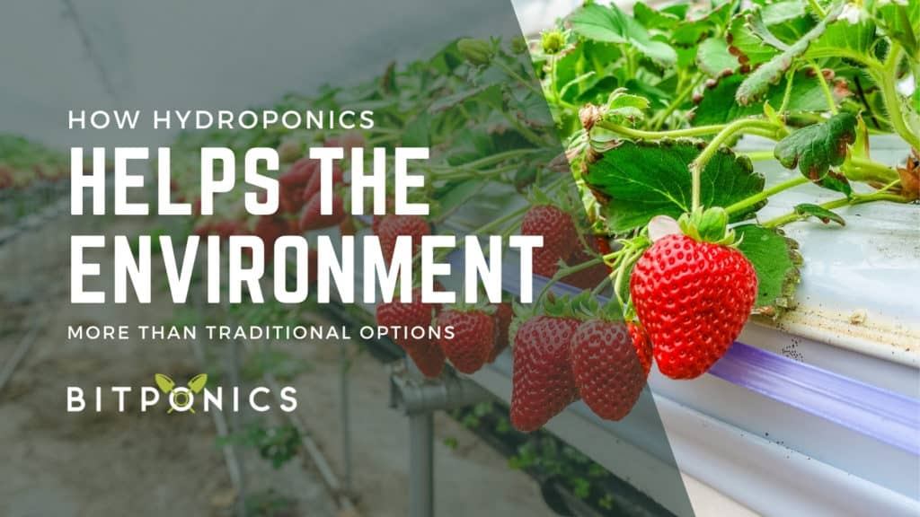How Does Hydroponics Help the Environment?