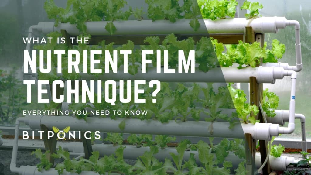 How Does the Nutrient Film Technique Work?