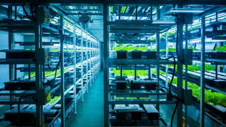 How Much Does Hydroponics Cost?