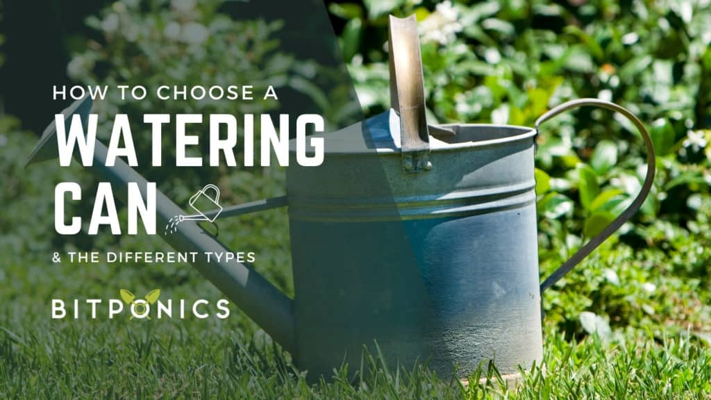 How to choose the best watering can.