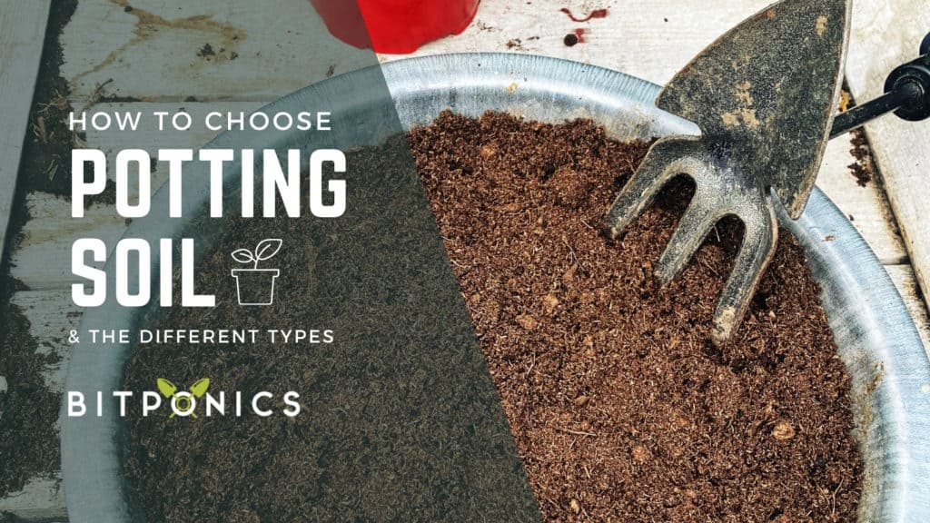 How to the best choose potting soil.