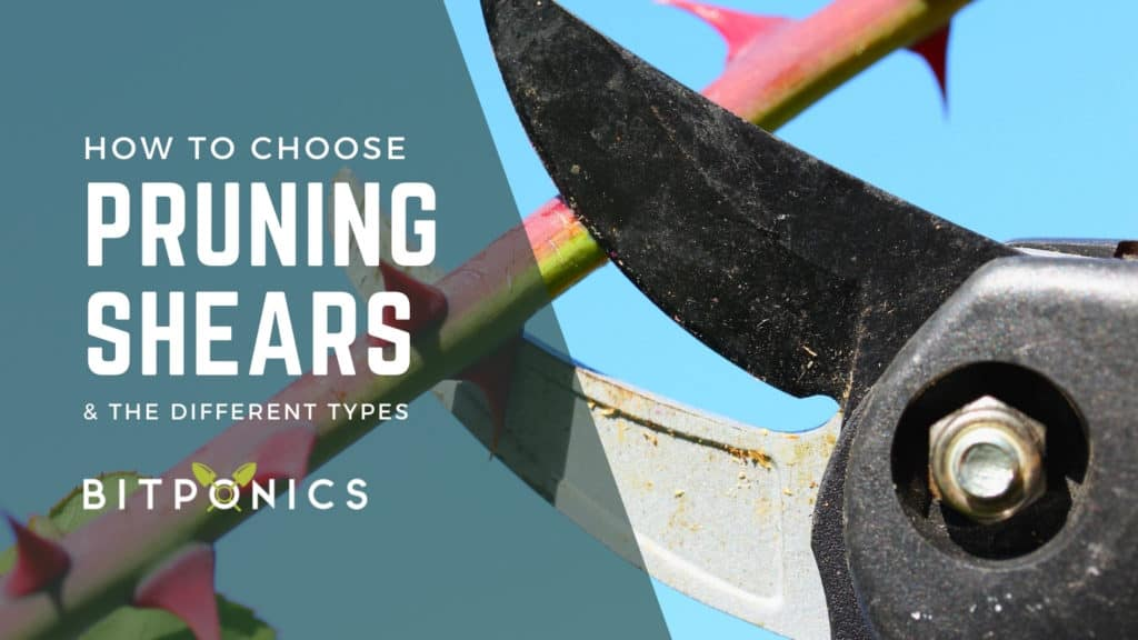 How to choose the best pruning shears.