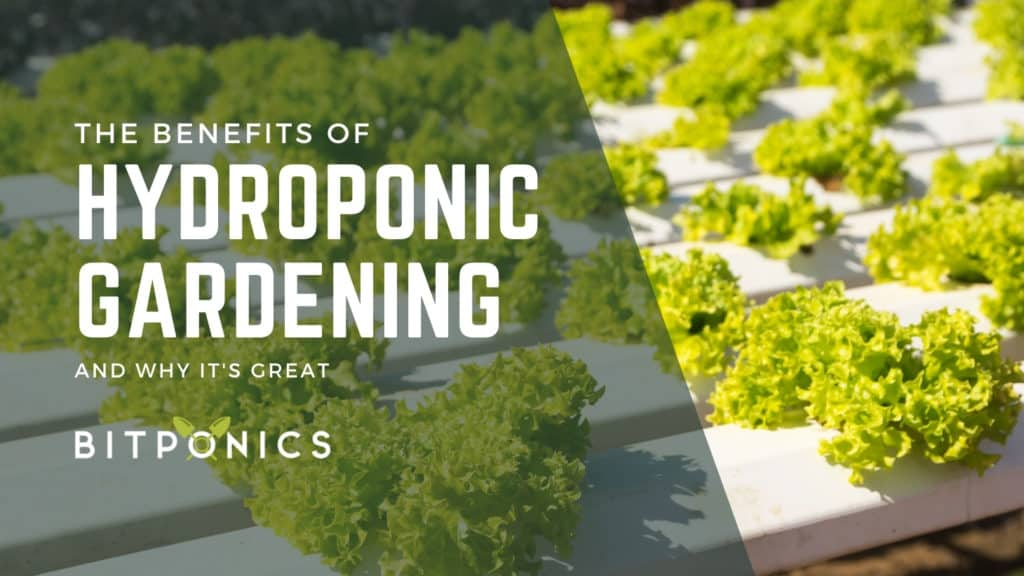 What Are the Benefits of Hydroponic Gardening?