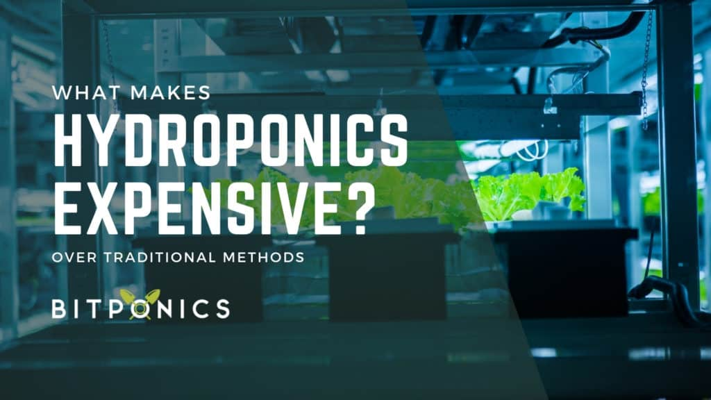 What Makes Hydroponics Expensive?