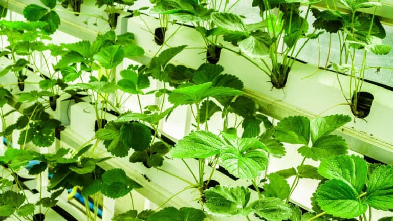 What Should the EC Be for Hydroponics?