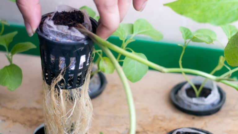 What Size Net Pots Do I Need For Hydroponics?