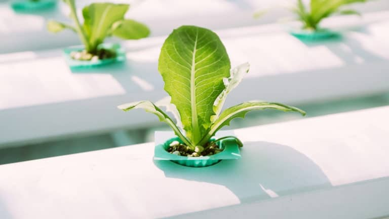 What Vegetables Can You Grow With Hydroponics?