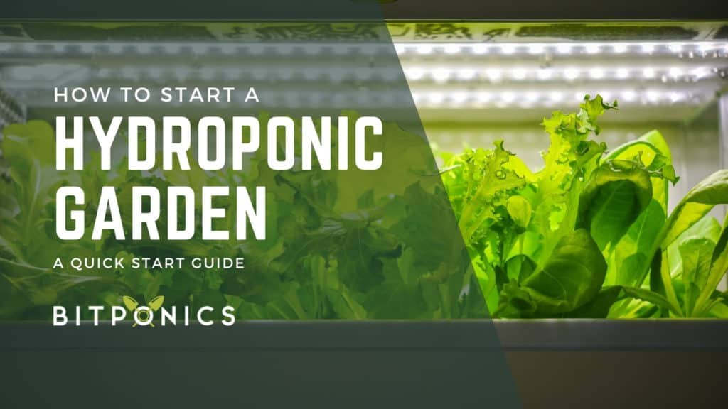 What Do You Need to Start a Hydroponic Garden?