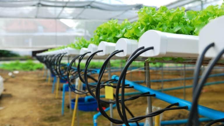 When Was Hydroponics Invented?