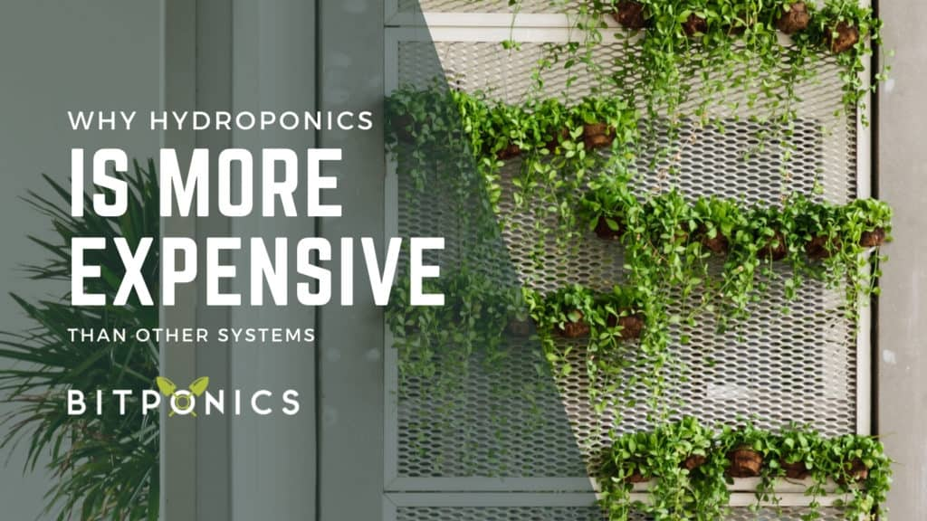 Why Are Hydroponic Systems Expensive?