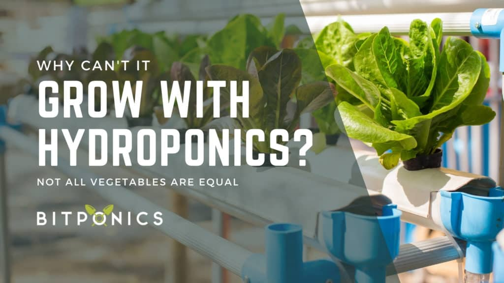 Why Can't All Vegetables Be Grown in a Hydroponic Environment?
