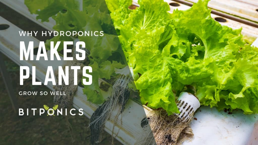 Why Does Hydroponics Make Your Plants Grow Faster?