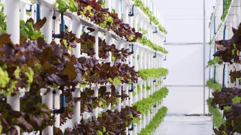 Hydroponics Cost vs Traditional Farming: Which Is Better?