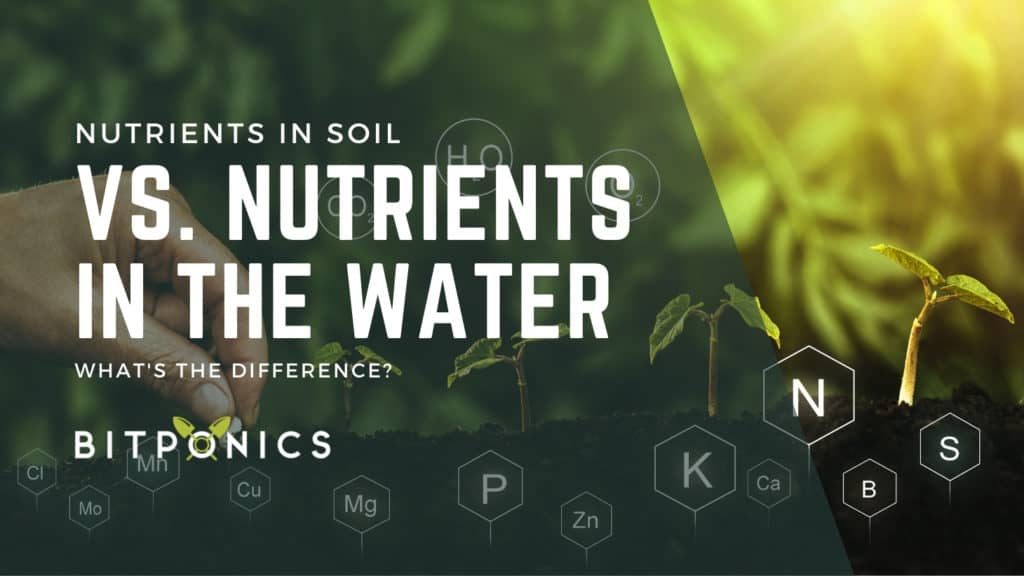 Nutrients vs. water: How do plants get nutrients in hydroponics?