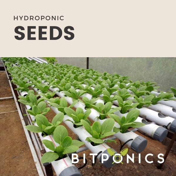 Hydroponic seeds