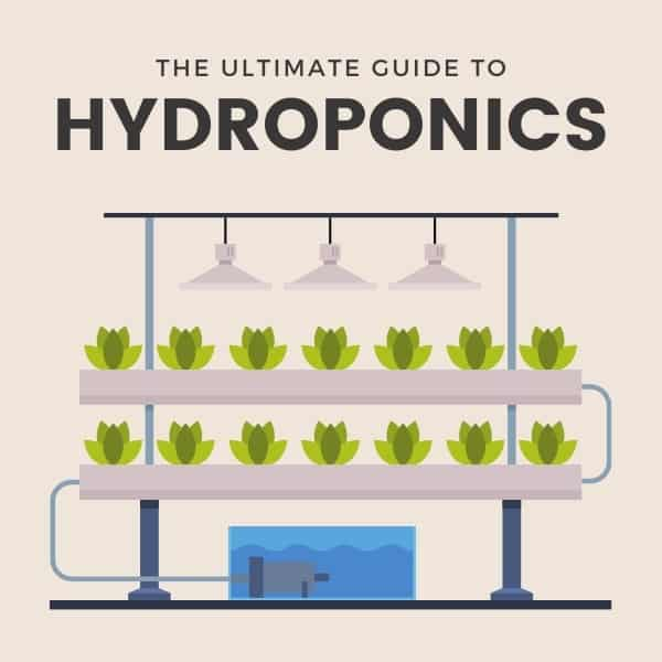 The ultimate guide to hydroponics